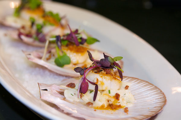 seared hervey bay scallops