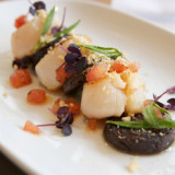 gal-seared-scallop