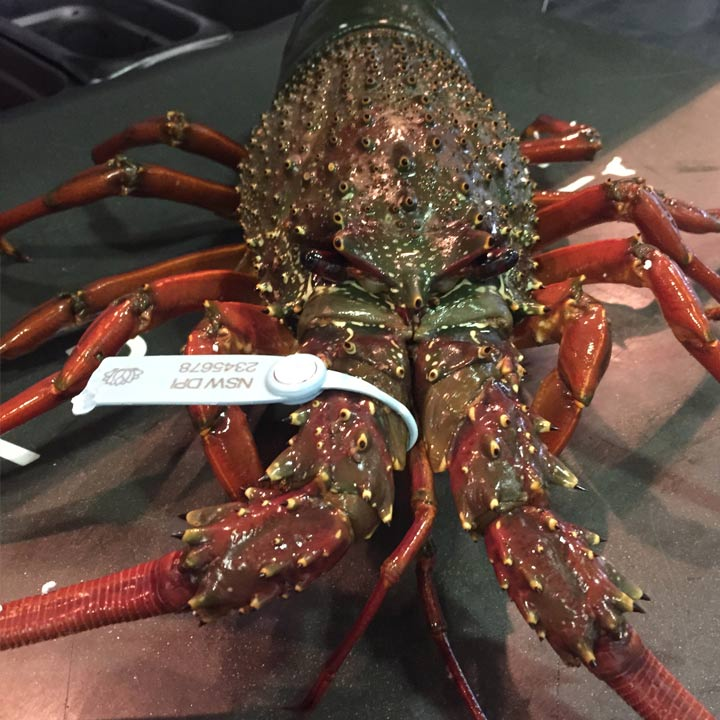 Garfish-Manly-Lobsters