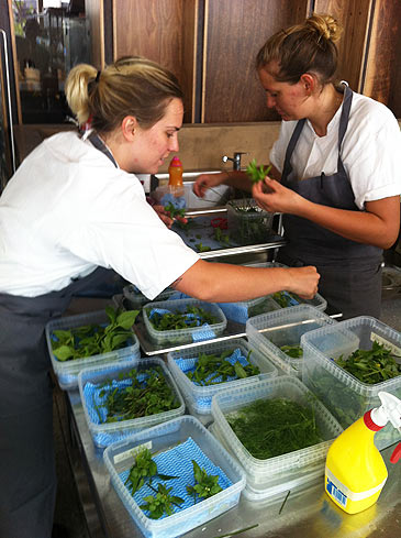 The Noma team sorting their foraged ingredients