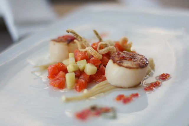 Manly Autumn Menu Feature: ocean trout tartare & seared scallops